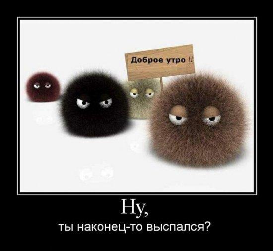 Kartinki_dobrom_utrom_smeshnyie