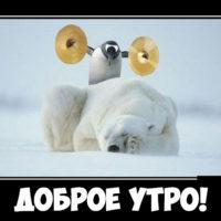 Kartinki_dobrom_utrom_smeshnyie8