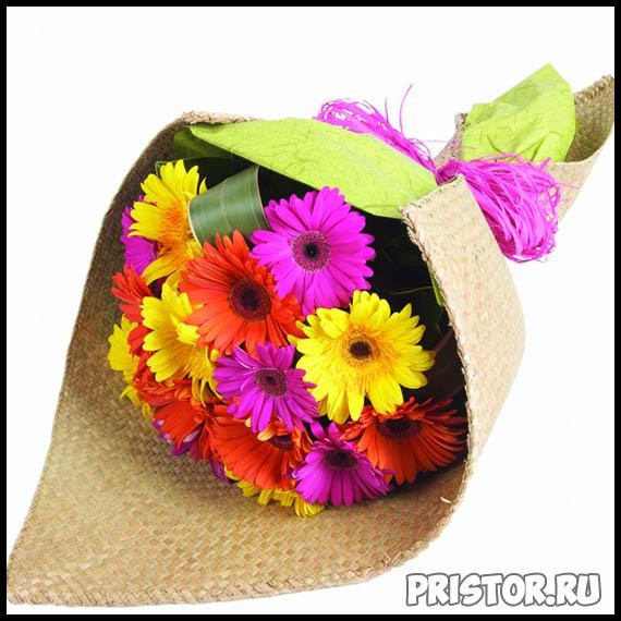 Гербера цветок фото, фото букетов герберы - подборка 12