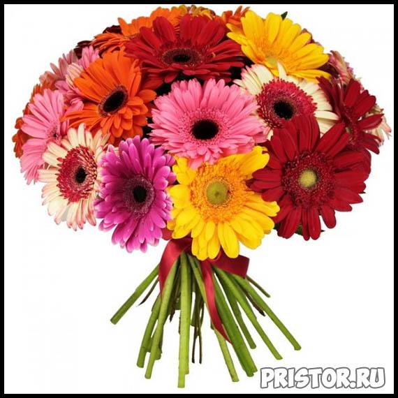 Гербера цветок фото, фото букетов герберы - подборка 3
