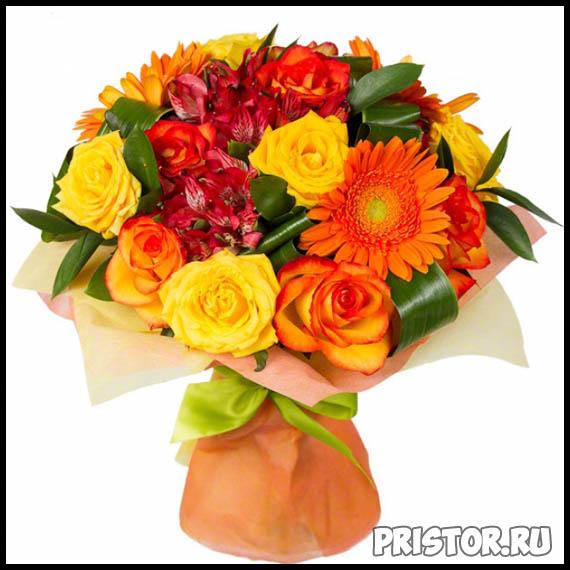 Гербера цветок фото, фото букетов герберы - подборка