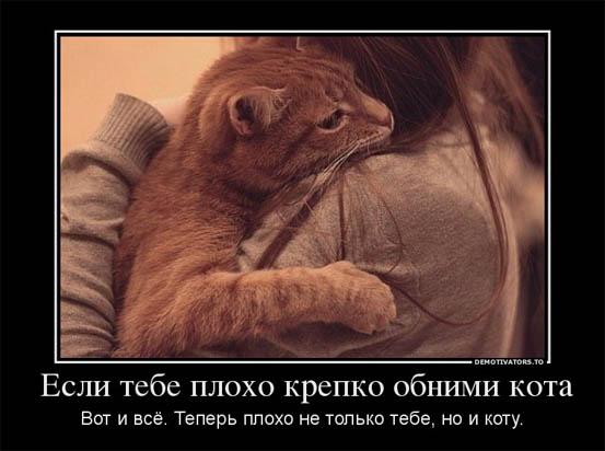 Демотиваторы про котов, смешные демотиваторы - коты и кошки 11
