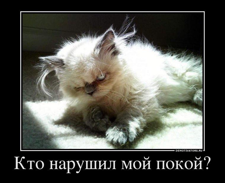 Демотиваторы про котов, смешные демотиваторы - коты и кошки 12