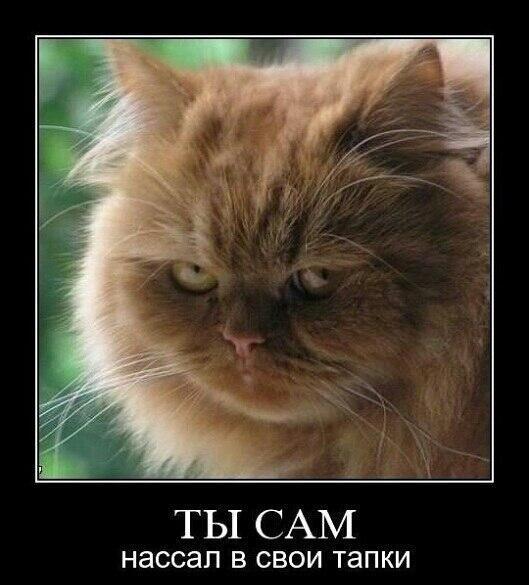 Демотиваторы про котов, смешные демотиваторы - коты и кошки 14