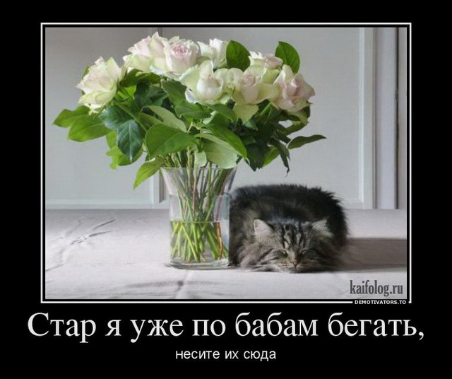 Демотиваторы про котов, смешные демотиваторы - коты и кошки 4