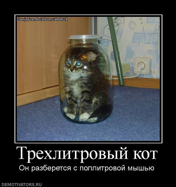Демотиваторы про котов, смешные демотиваторы - коты и кошки 7