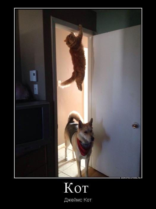 Демотиваторы про котов, смешные демотиваторы - коты и кошки 8