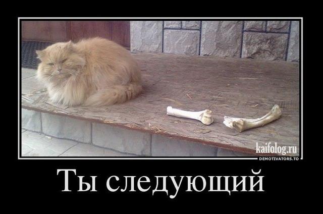 Демотиваторы про котов, смешные демотиваторы - коты и кошки 9