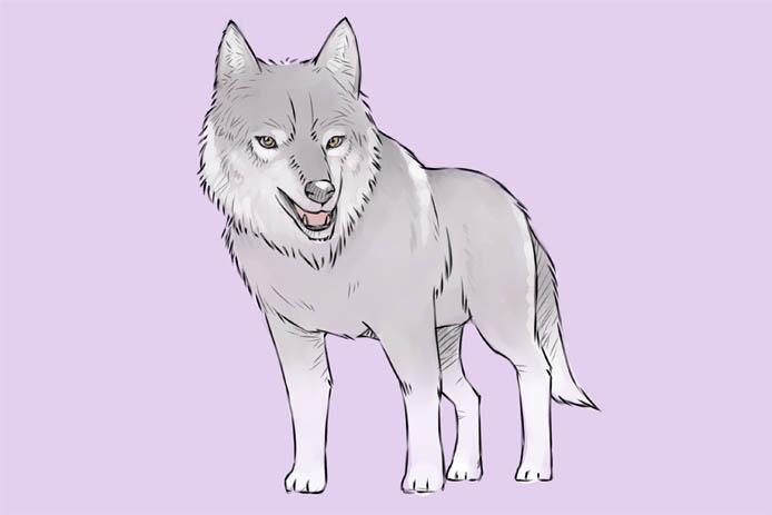 Картинка волка для детей, прикольные картинки волков - смотреть 8