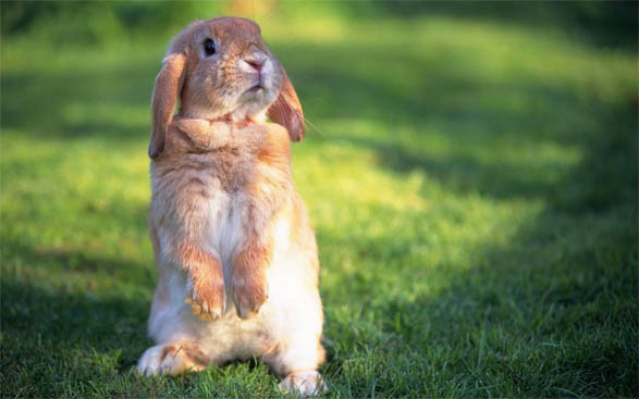 Картинки зайцев для детей, красивые картинки зайчиков для детей 1