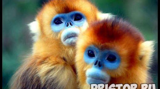Картинки необычных животных, необычные животные - фото и картинки 4