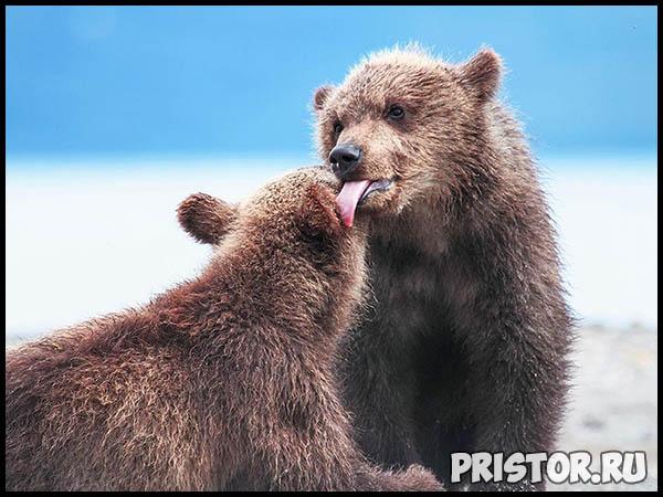 Красивые фото природы России, фото - пейзажи природы России 27