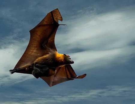 Летучая мышь картинки, прикольные и красивые картинки летучей мыши 1