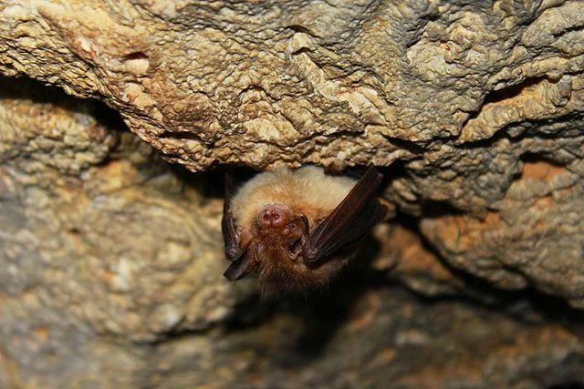 Летучая мышь картинки, прикольные и красивые картинки летучей мыши 13