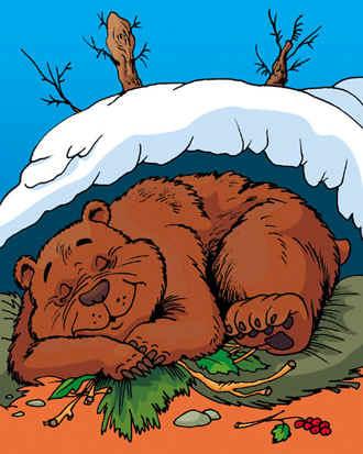 Медведь в берлоге картинки для детей - красивые и прикольные