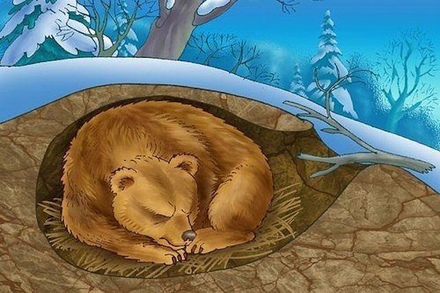 Медведь в берлоге картинки для детей - красивые и прикольные 3