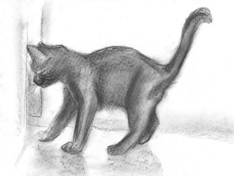 Рисунок кошки карандашом - прикольные и красивые картинки 3