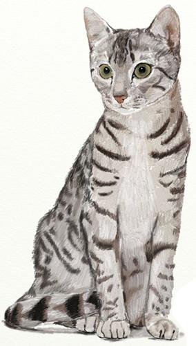 Рисунок кошки карандашом - прикольные и красивые картинки 4