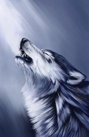 Скачать фото волка бесплатно 7