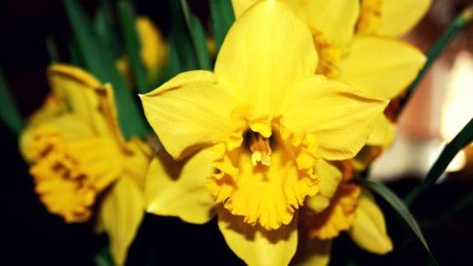 Скачать цветы, картинки - бесплатно 17