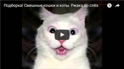 Смешные видео про кошек до слез - 2017
