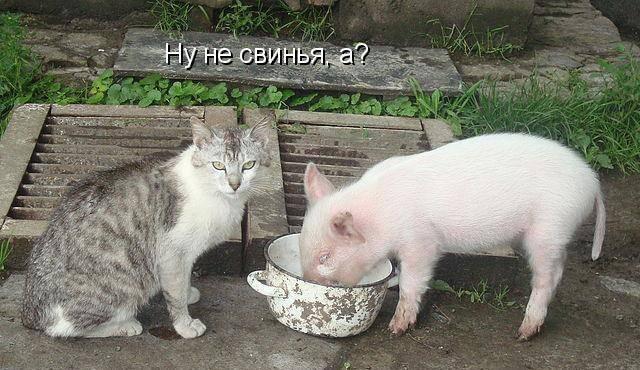 Смешные картинки с надписями про животных 10