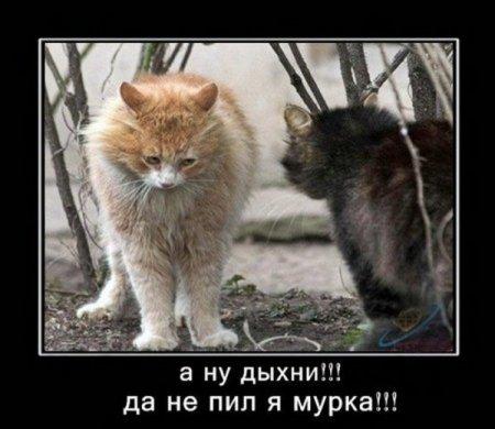Смешные картинки с надписями про животных 11
