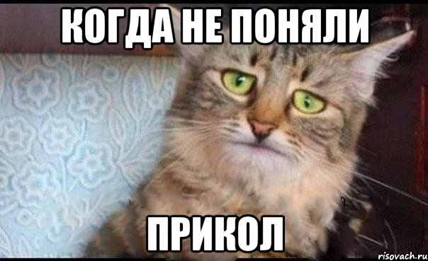 Смешные картинки с надписями про животных 14