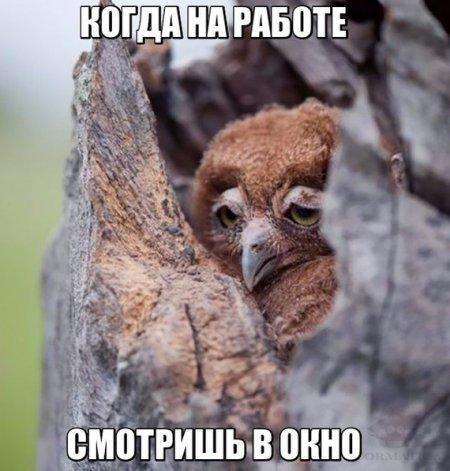 Смешные картинки с надписями про животных 15