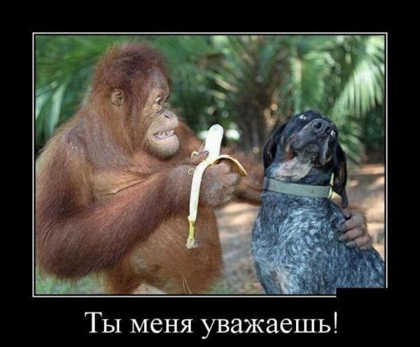 Смешные картинки с надписями про животных 16