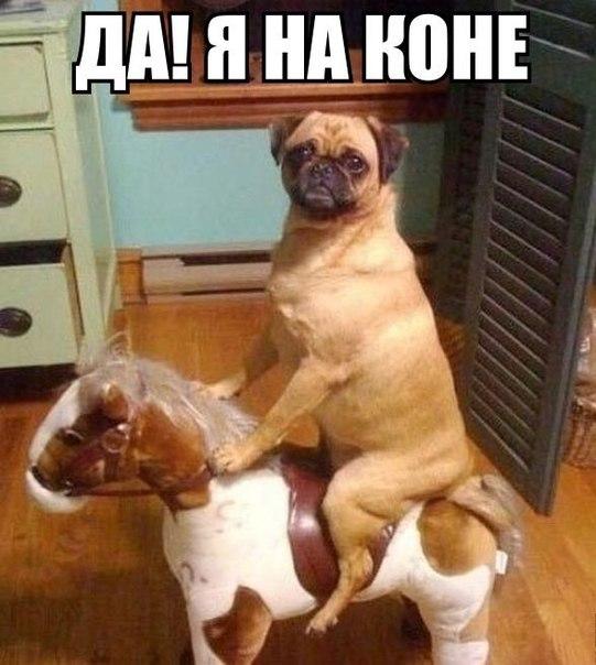 Смешные картинки с надписями про животных 2