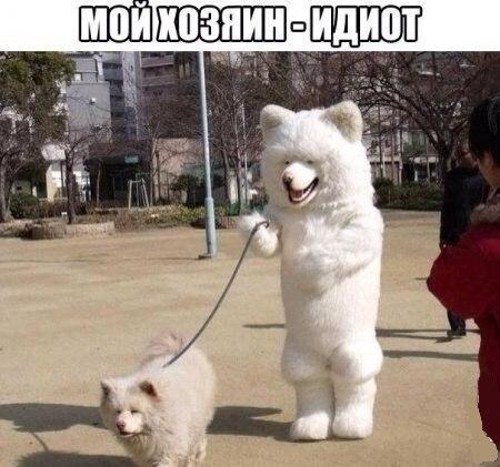 Смешные картинки с надписями про животных 6