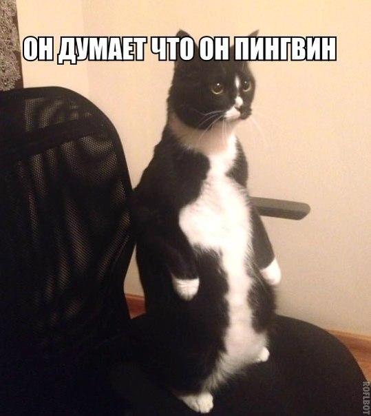 Смешные картинки с надписями про животных 7
