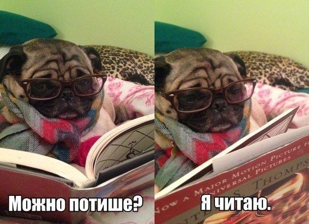 Смешные картинки с надписями про животных 8