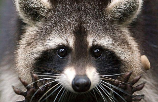 Смотреть картинки про животных - прикольные и смешные, бесплатно 1