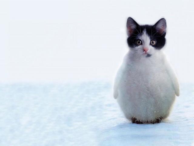 Смотреть картинки про животных - прикольные и смешные, бесплатно 11