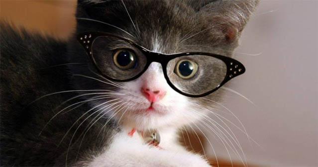 Смотреть картинки про животных - прикольные и смешные, бесплатно 13