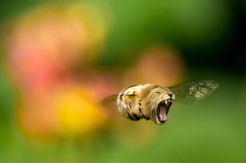 Смотреть картинки про животных - прикольные и смешные, бесплатно 14