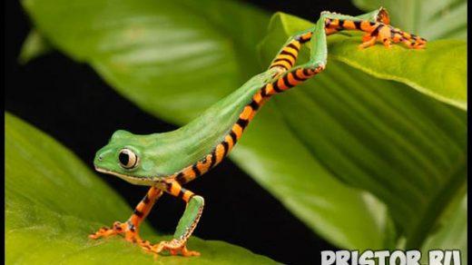 Фото животных для детей, красивые и прикольные животные для малышей и детей - фотографии 16