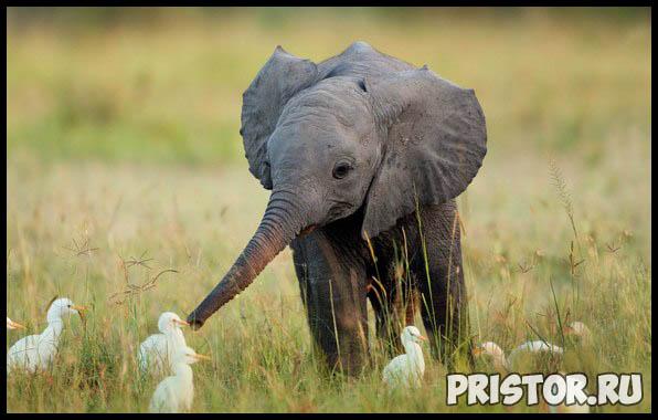 Фото животных для детей, красивые и прикольные животные для малышей и детей - фотографии 2