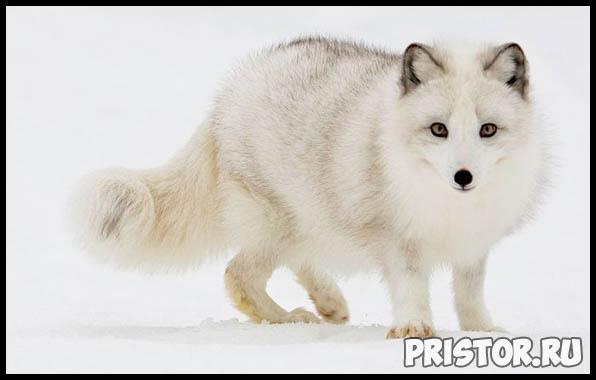 Фото животных для детей, красивые и прикольные животные для малышей и детей - фотографии 4