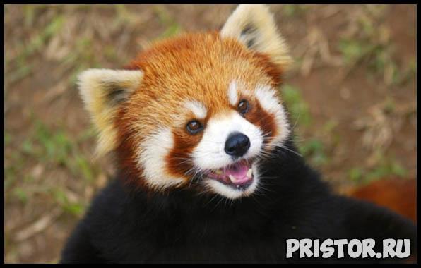 Фото животных для детей, красивые и прикольные животные для малышей и детей - фотографии 8