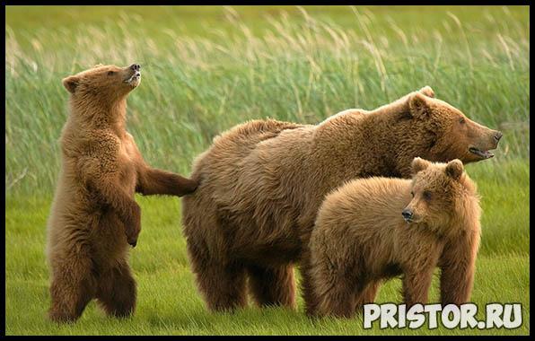 Фото животных для детей, красивые и прикольные животные для малышей и детей - фотографии 9