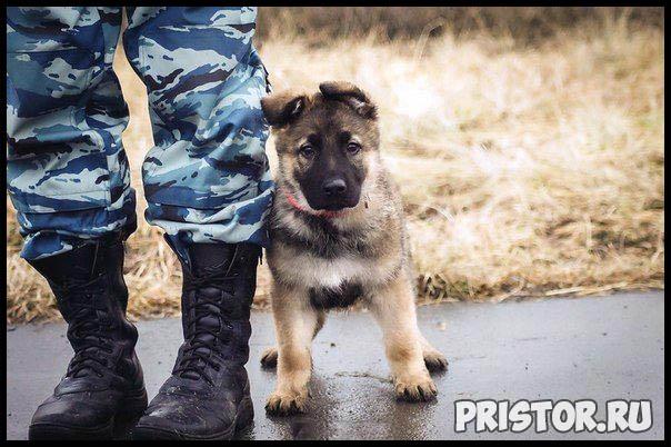 Фото кошек и собак прикольные картинки, классные фото кошек и собак 15
