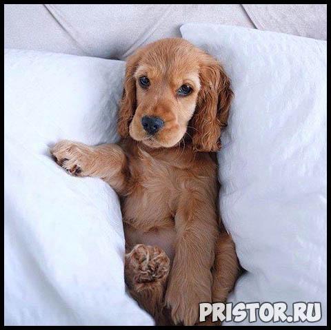 Фото кошек и собак прикольные картинки, классные фото кошек и собак 3
