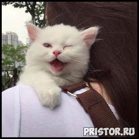 Фото кошек и собак прикольные картинки, классные фото кошек и собак 5