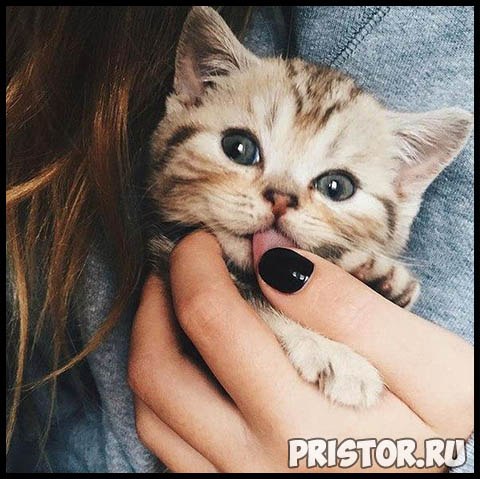 Фото кошек и собак прикольные картинки, классные фото кошек и собак