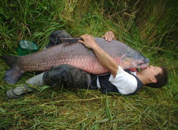 Фото приколы про рыбалку, смешные приколы на рыбалке - фото 10