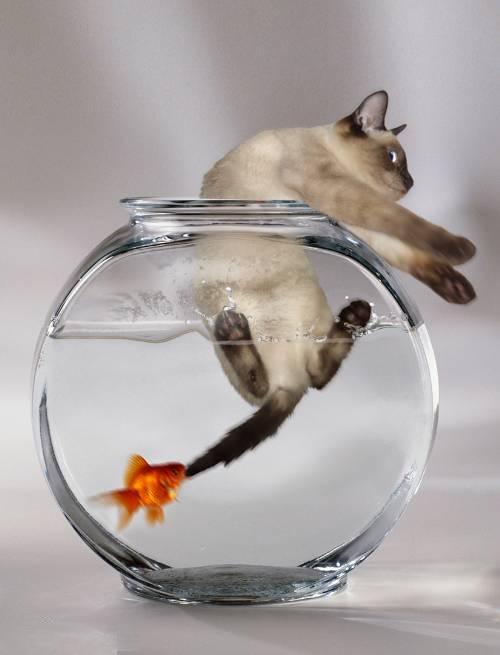 Фото приколы про рыбалку, смешные приколы на рыбалке - фото 4