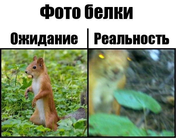 Фото приколы с животными до слез 7